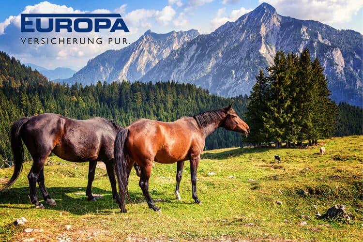 Pferdehaftpflichtversicherung Bei Der Europa Versicherung Test